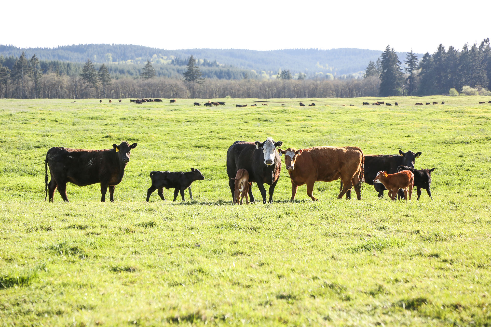 colvin ranch
